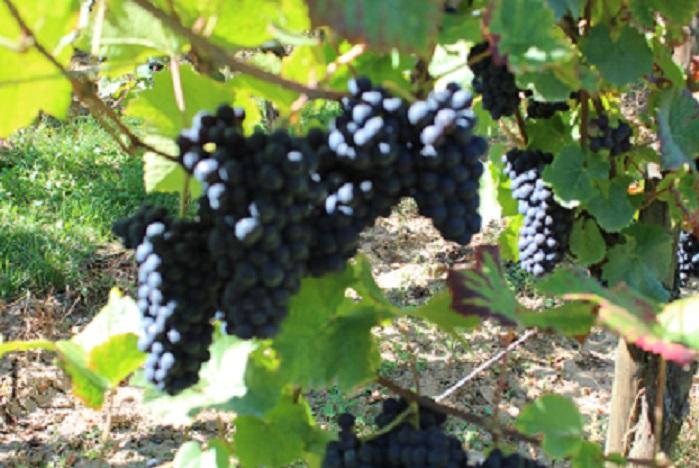 benne-raisins